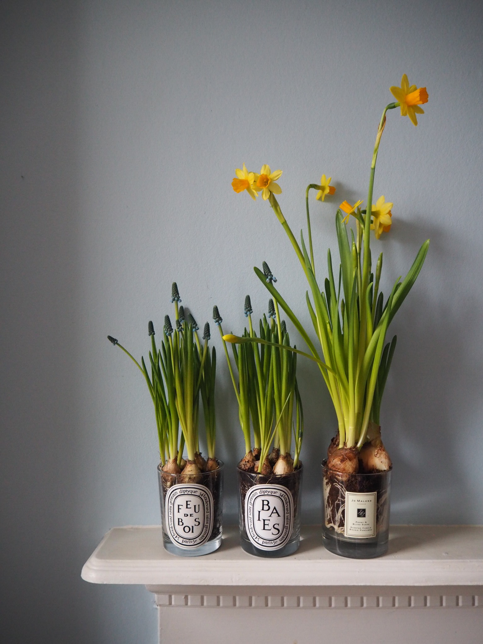 Spring Bulbs And Upcycling